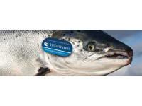 Grieg Seafood Shetland Ltd