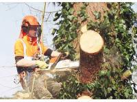 GTF Treecare Ltd