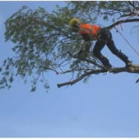 Image Of King Cuts Tree Services