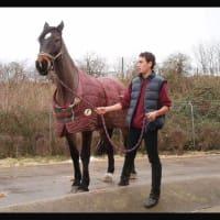 Image 9 Of Rug Rehab Horse Laundry