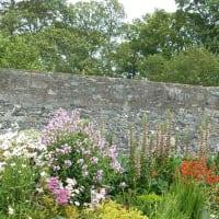 image of garden care - Garden Design Knaresborough
