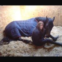 Image 5 Of Rug Rehab Horse Laundry