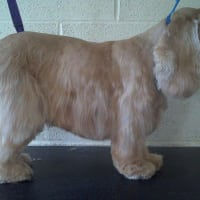Dog Cat Grooming In Leeds West Yorkshire Reviews Yell