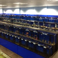Aquascape Fish Imports Ltd, Sutton Coldfield | Aquarium ...