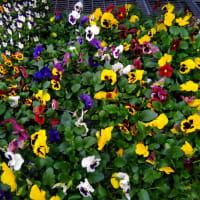Plantation Garden Centre, Harrow | Garden Centres - Yell