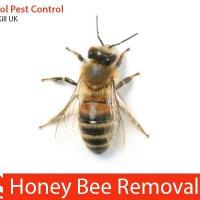 Waspkill Uk Pest Control Bristol Pest Amp Vermin Control