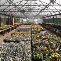 Garden Centres Near Urmston Reviews Yell