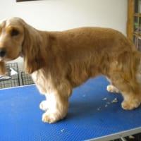 Maude eddies dog grooming dog cat grooming yell image 7 of maude eddies dog grooming solutioingenieria Images