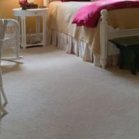 Image of Carpet All