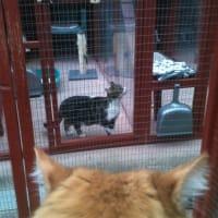 Catteries Near Derby Lane De6 Brailsford Ashbourne Reviews Yell