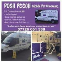 Enjoyable Posh Pooch Mobile Dog Grooming Croydon Mobile Dog Home Interior And Landscaping Analalmasignezvosmurscom