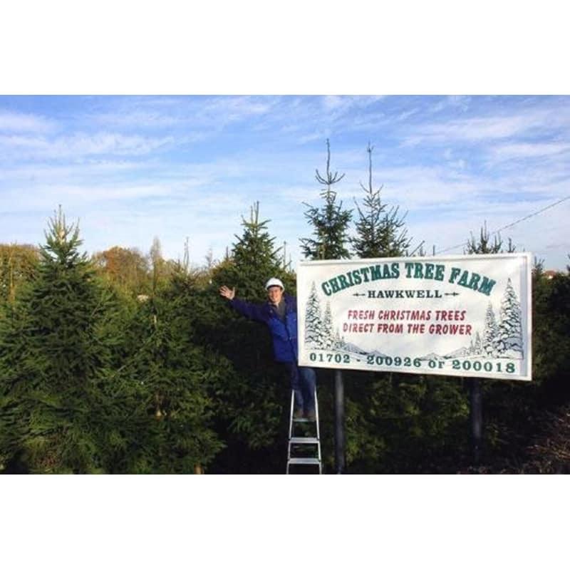 Christmas Tree Farm, Battlesbridge & Hawkwell, Wickford   Christmas Trees &  Decorations - Yell - Christmas Tree Farm, Battlesbridge & Hawkwell, Wickford Christmas