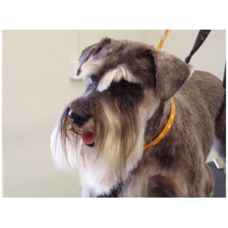 Designer dogs musselburgh dog cat grooming yell solutioingenieria Choice Image