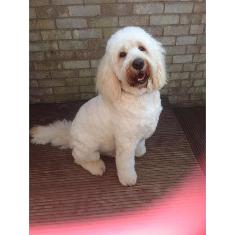 Pampurred paws st neots dog cat grooming yell solutioingenieria Choice Image
