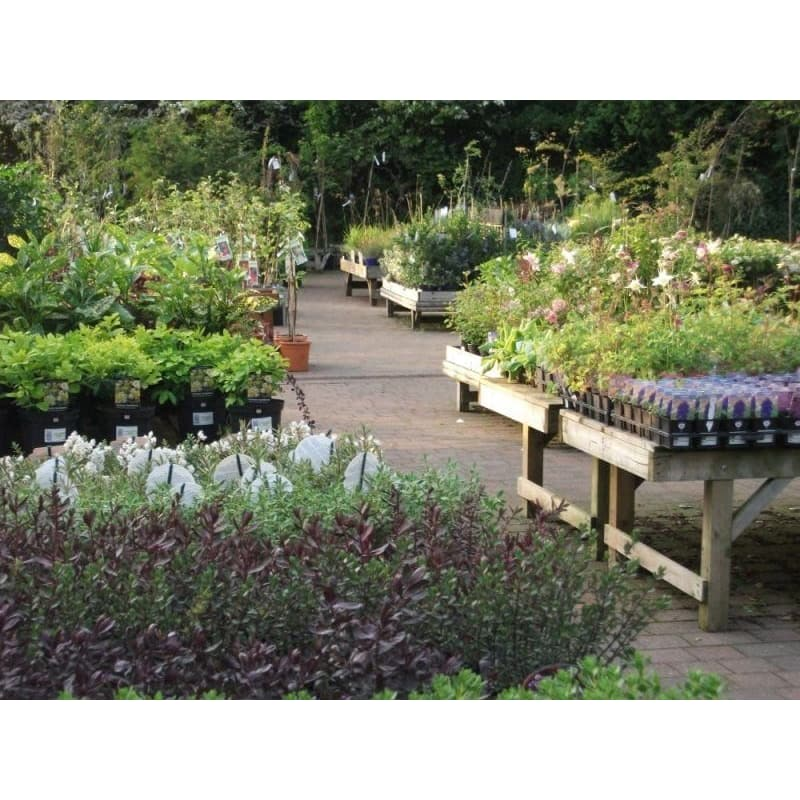 Lee May S Gardening Life January 2016 Bonsai Display Ideas