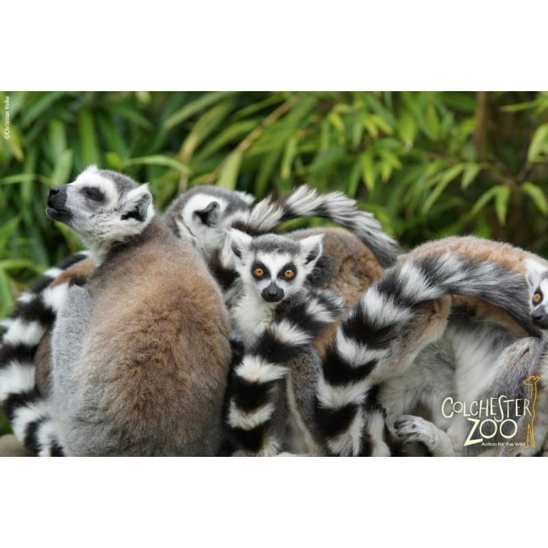 Colchester Zoo, Colchester | Zoos - Yell