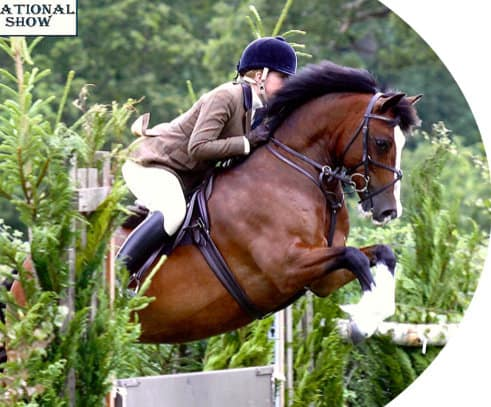 Steph Wheway - Breaking, Schooling, Show & WHP Production | The Stables, Little Stanney Lane, Chester CH2 4HW | +44 7983 617448