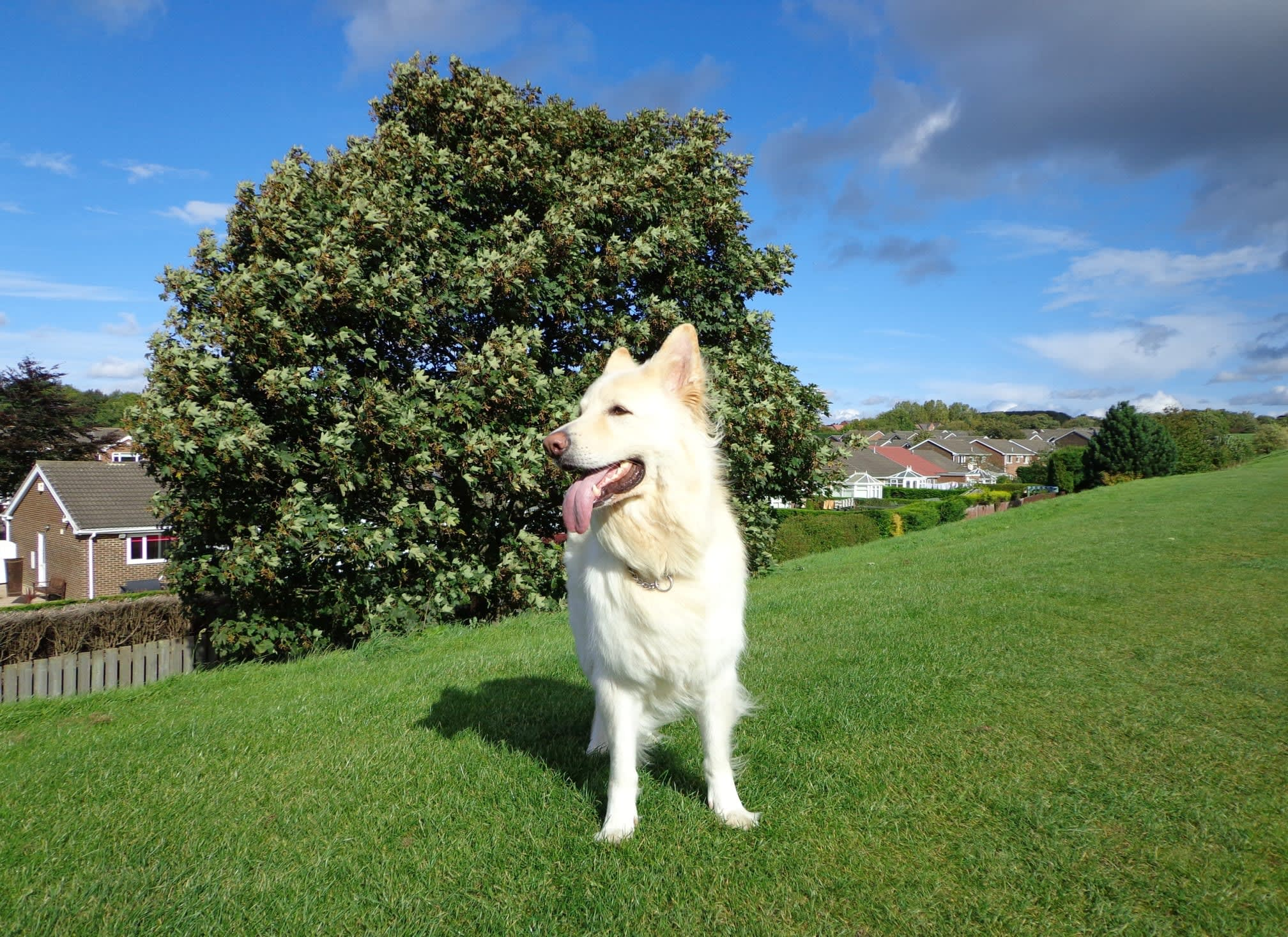 K-9 Companion - Professional One to One Dog Walking | 105 Picktree Lodge, Chester Le Street DH3 4DQ | +44 7903 297719
