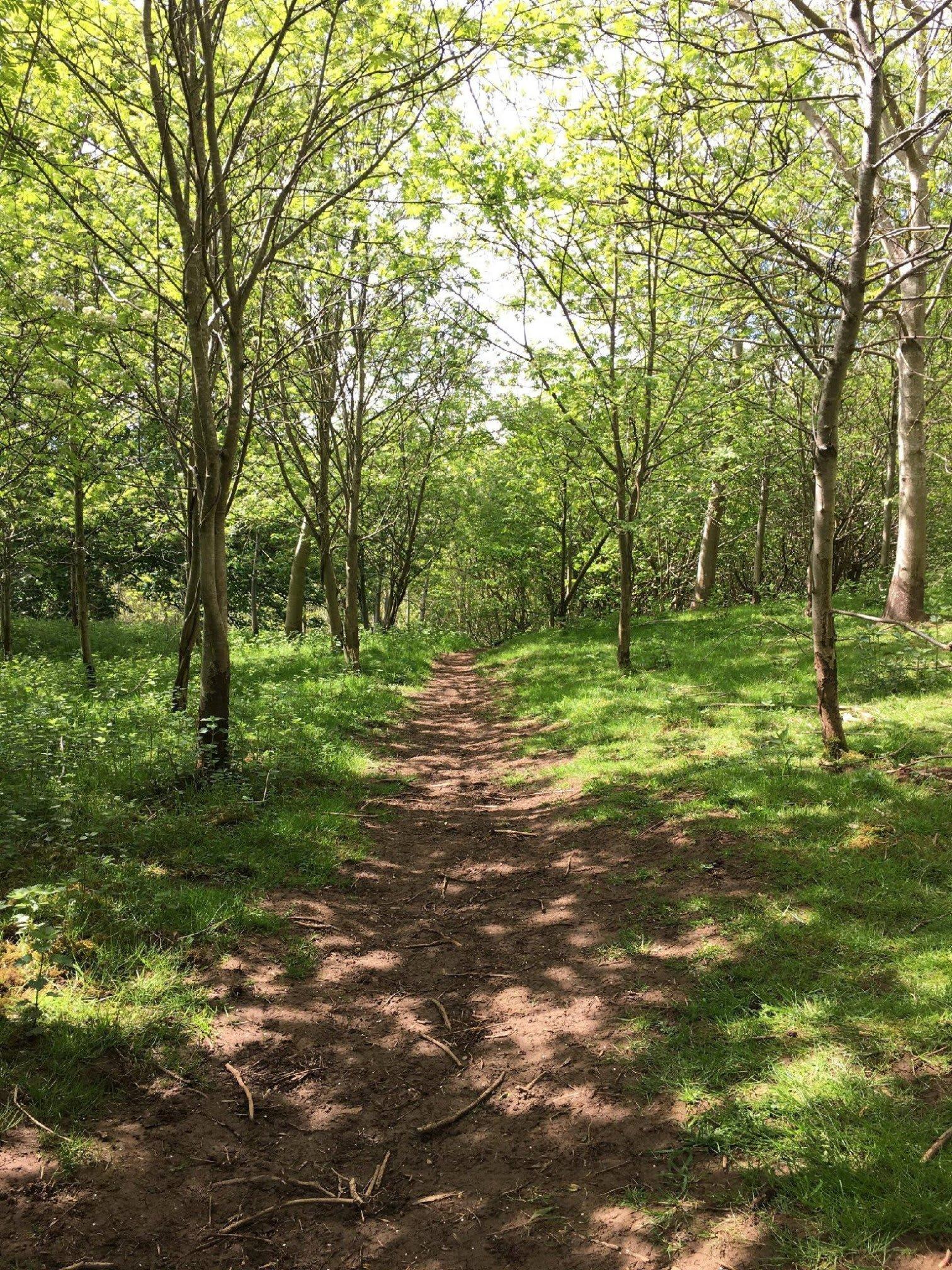 Wensleydale Camping at Aysgarth Falls   Manor Grange Farm Low Lane, Leyburn DL8 4HU   +44 1969 663399