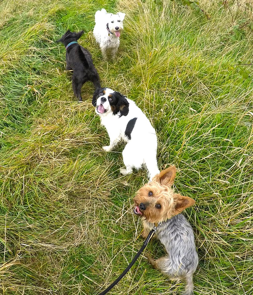 Take The Lead - Professional Dog Walking & Pet Services In Blackpool | Blackpool FY1 5FG | +44 7766 220024
