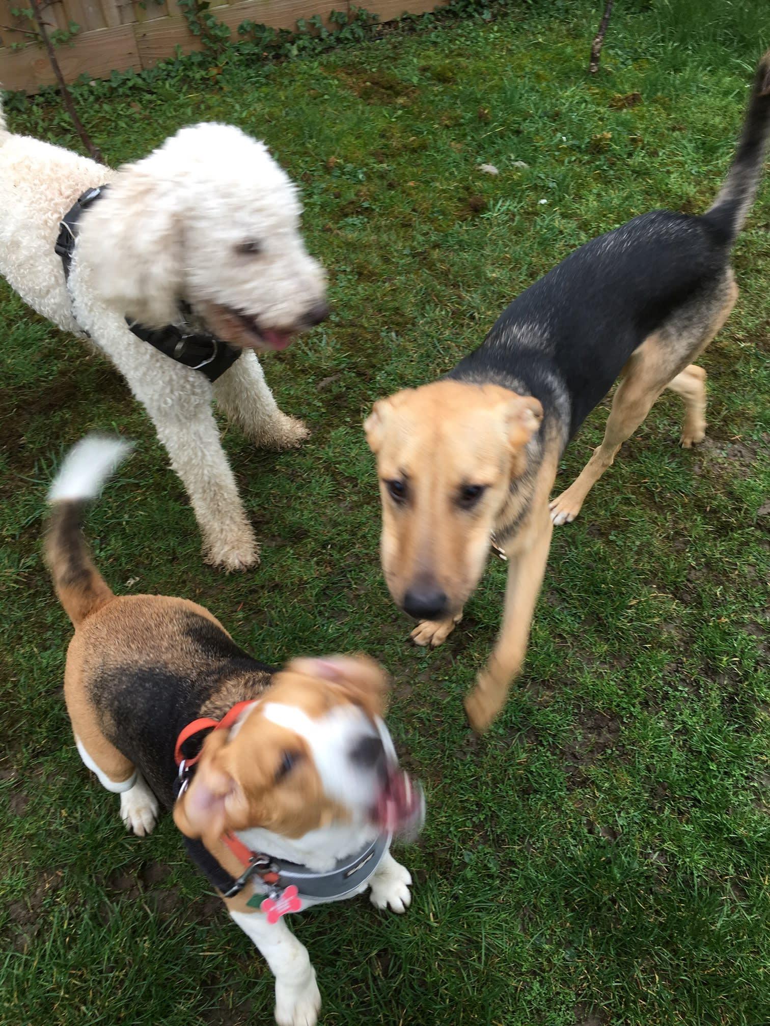 Dog Walking & Pet Sitting | 185 Howard St, Oxford OX4 3BB | +44 7414 666687